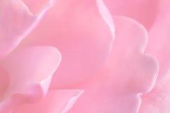 Pink rose background stock photos