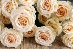 Pink rose background Stock Image