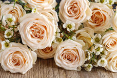 Pink rose background Stock Images