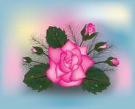 Pink rose background, Stock Photo