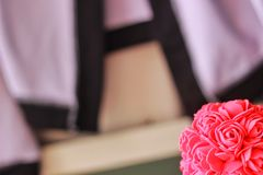 Pink rose background. Pink rose in valentine background Stock Photography