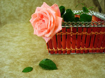 Pink rose in basket Royalty Free Stock Photography