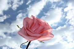 Pink Rose. A beautiful pink rose in the clouds stock photo