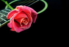 Pink rose and black acoustic guitar. Copy spaces Royalty Free Stock Images