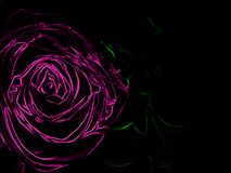 Pink rose on black background processed with neon. Bright pink blossom rose, closeup on black background with copy space. Processed with neon stock illustration