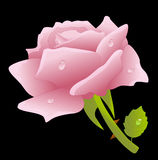Pink rose on a black background Stock Images