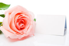 Pink rose and blank card Stock Images