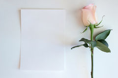 Pink Rose and Blank paper Mockup Royalty Free Stock Photography
