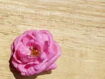 Pink rose on bleach wood 5. Pink rose bleach wood cut flower gardening sweet soft gentle stock image
