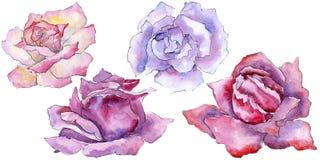 pink rose Blom- botanisk blomma Lös isolerad vårbladvildblomma Royaltyfri Foto