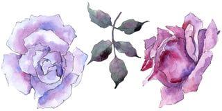 pink rose Blom- botanisk blomma Lös isolerad vårbladvildblomma Royaltyfria Bilder