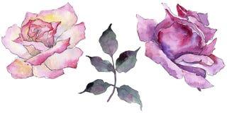 pink rose Blom- botanisk blomma Lös isolerad vårbladvildblomma Arkivfoto