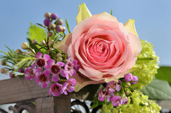 Pink rose in bloom Stock Photos