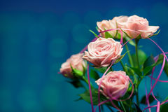 Pink rose with blue blurry background. Pink rose with blue background Royalty Free Stock Photos