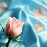 Pink Rose on Blue Satin. A detal of a pink rose on blue satin fabric Royalty Free Stock Photos