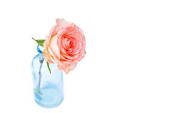 Pink rose in blue vase Royalty Free Stock Photos