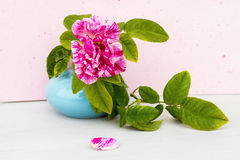 Pink rose in blue vase Stock Photography