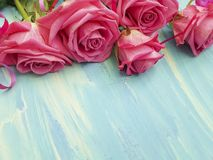 Pink rose on blue wooden beauty. Pink rose on blue wooden birthday romance beauty Stock Photo
