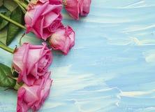 Pink rose on blue wooden. Birthday romance Stock Photos