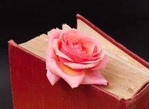 Pink Rose Bookmark Royalty Free Stock Photos