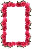 Pink rose border or frame stock photos