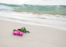Pink roses on beach Royalty Free Stock Photography