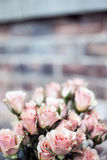 Pink Rose Bouquet of Focus Photography Royalty Free Stock Images