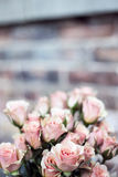 Pink Rose Bouquet of Focus Photography Royalty Free Stock Photography