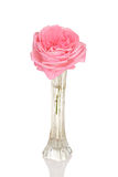 Pink rose in bud vase Stock Image