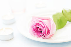 Pink rose with candles Royalty Free Stock Image