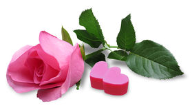 Pink rose with candy hearts Royalty Free Stock Image