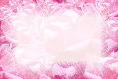 Pink rose canvas texture background Stock Photography