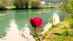 Pink rose with Chinese river Stock Image