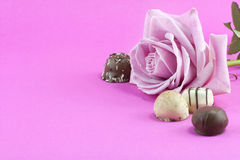 Pink rose and chocolate background Royalty Free Stock Photo