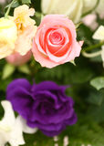 Pink Rose(click image to zoom) Royalty Free Stock Photo