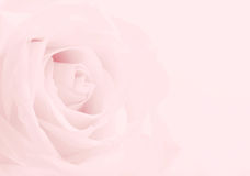 Pink rose close-up as background. Soft blur focus. In sepia past Royalty Free Stock Images