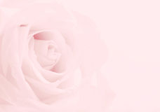 Pink rose close-up as background. Soft blur focus. In sepia past Royalty Free Stock Photo
