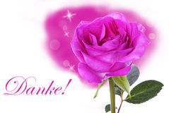 Pink Rose with Danke Royalty Free Stock Images