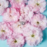 White gold ring with diamonds inside tender pink rose petals. Pink Rose and diamond ring nestled inside. Macro closeup Royalty Free Stock Image