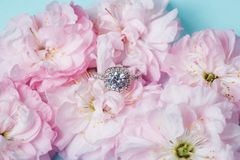 White gold ring with diamonds inside tender pink rose petals. Pink Rose and diamond ring nestled inside. Macro closeup Royalty Free Stock Photography