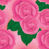 Pink rose drawn seamless pattern Stock Images