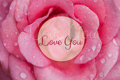 Pink rose with drops of dew. royalty free stock photo