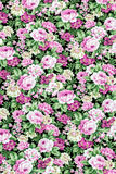 Pink rose fabric background, Fragment of colorful retro tapestry Royalty Free Stock Photo