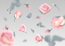 Pink rose falling flowers and buds vector background. 3D romantic illustration Stock Image