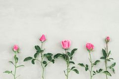 Pink rose. Festive flower English rose composition on the white background. stock photography