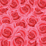 Pink rose floral background. Royalty Free Stock Photography