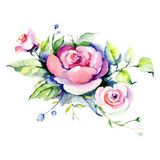 Pink rose floral botanical flower. Watercolor background illustration set. Isolated bouquet illustration element. Pink rose floral botanical flower. Wild spring royalty free illustration