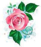 Pink_rose_flower illustration stock