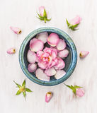 Pink rose flower in blue bowl on white wooden background with bud Stock Image