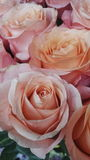 Pink rose. Flower bouquet love royalty free stock photo